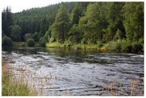 The Geen Tree fishing pool, Wester Elchies, River Spey